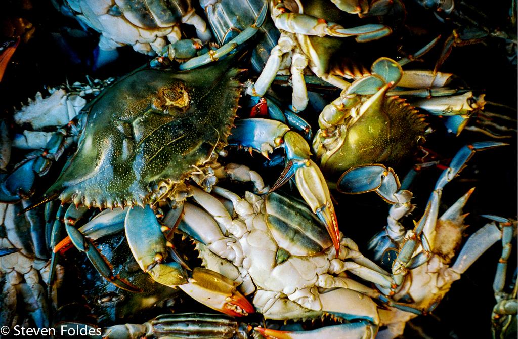 Crabs-4